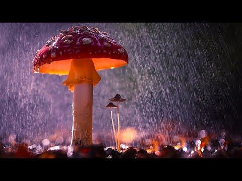 Вопрос: Какова наиболее благоприятная температура для роста белых грибов?