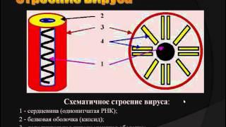 Биология Самкова 1 1 грибы и бактерии