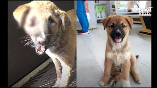 What Happened During 7 Hours When This Cute Puppy Was Lost Is.. (Part 1) | Kritter Klub