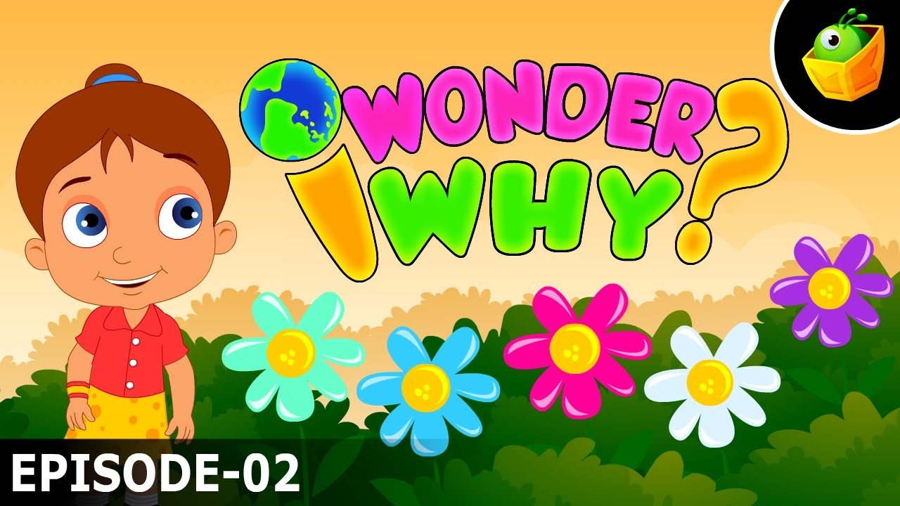 Why Do Flowers Have Diffe Colours I Wonder Amazing Interesting Fun Facts For Kids You