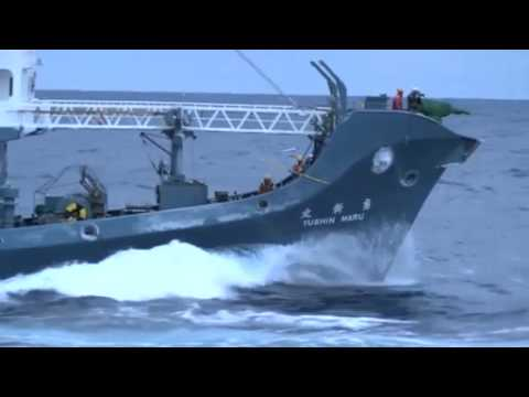 Environment Minister investigating fresh claims Japanese whalers attacked Sea Shepherd activists in
