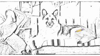 Auto Draw 2: Country Canine, German Shepherd