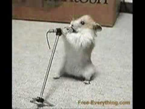 hamster song and dance