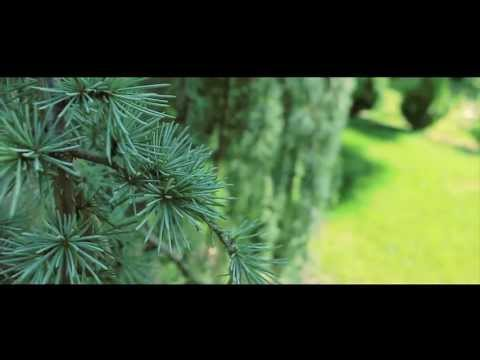 Canon Rebel T5i Cinematic Look