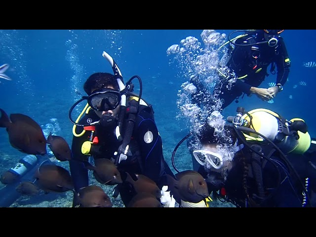 February Highlights - Gopher Diving Okinawa