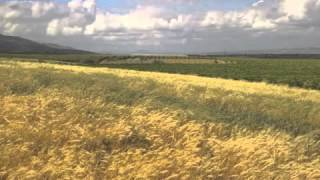 Israel Update - Bombs Going off in Syria, Wild Barley is Abib, March 20, 2016