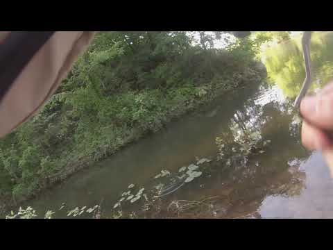 Creek Fishing For Bass With My FAVORITE Stick Bait!