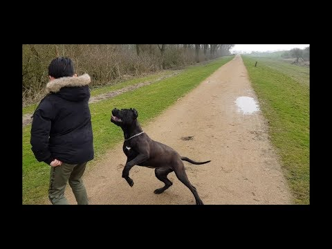 A walking day in the woods with Panthera the black pitbull  and the family