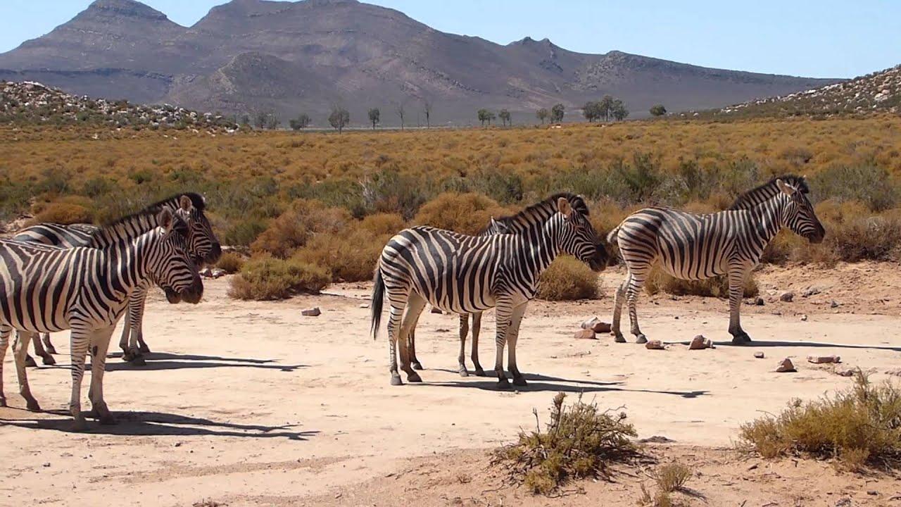 plus près de jolie et colorée gamme exclusive Aquila Private Game Reserve, near Cape Town, South Africa
