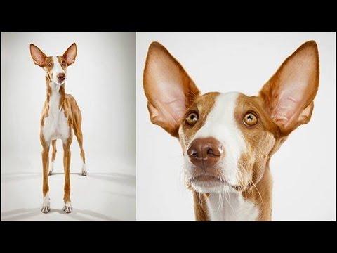 10 najzdrowszych ras psów