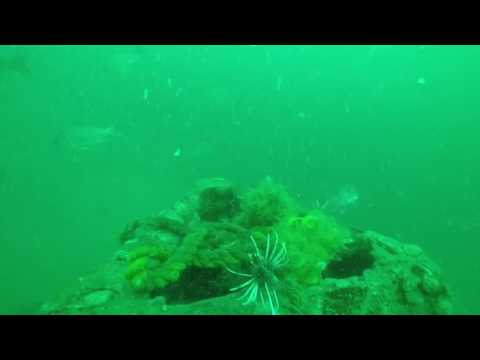 lionfish removal 4 1 17