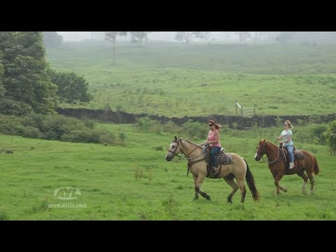 Ho'omau Ranch - Hawaii
