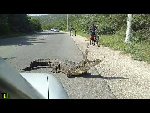 Crocodile K!LLS Man in Portmore | Teach Dem