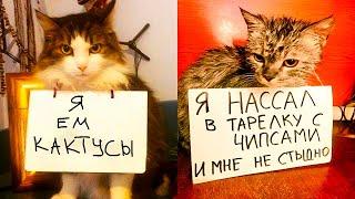 Коты, которые НИ О ЧЁМ НЕ ЖАЛЕЮТ. Приколы с котами   Мемозг #432