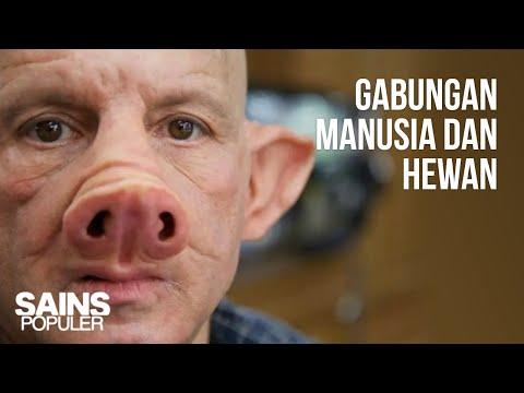 5 Manusia Campuran Hasil Rekayasa Genetika (Chimera), Dari Manusia Babi Hingga Manusia Monyet