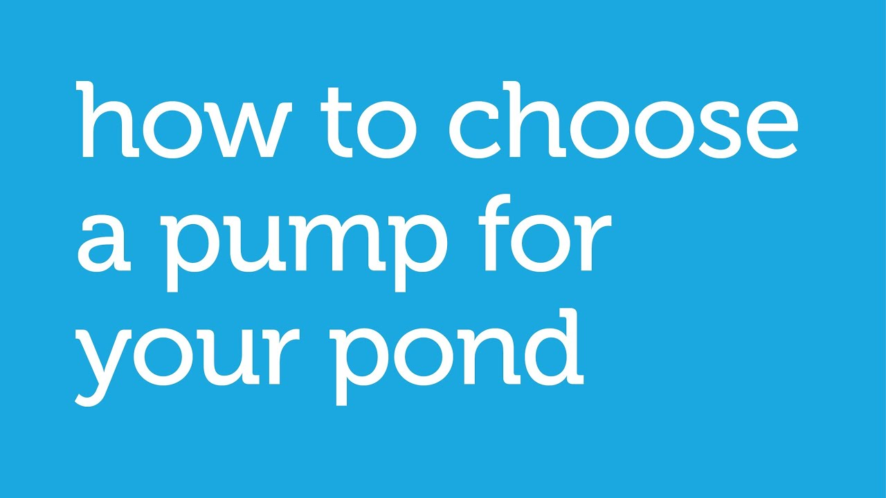 how to choose the right pump for a pond: petco how-to
