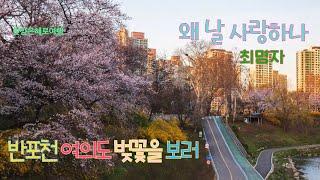 왜 날 사랑하나 찬양: 최명자  반포천/여의도 벚꽃 4…