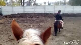 На конюшни )