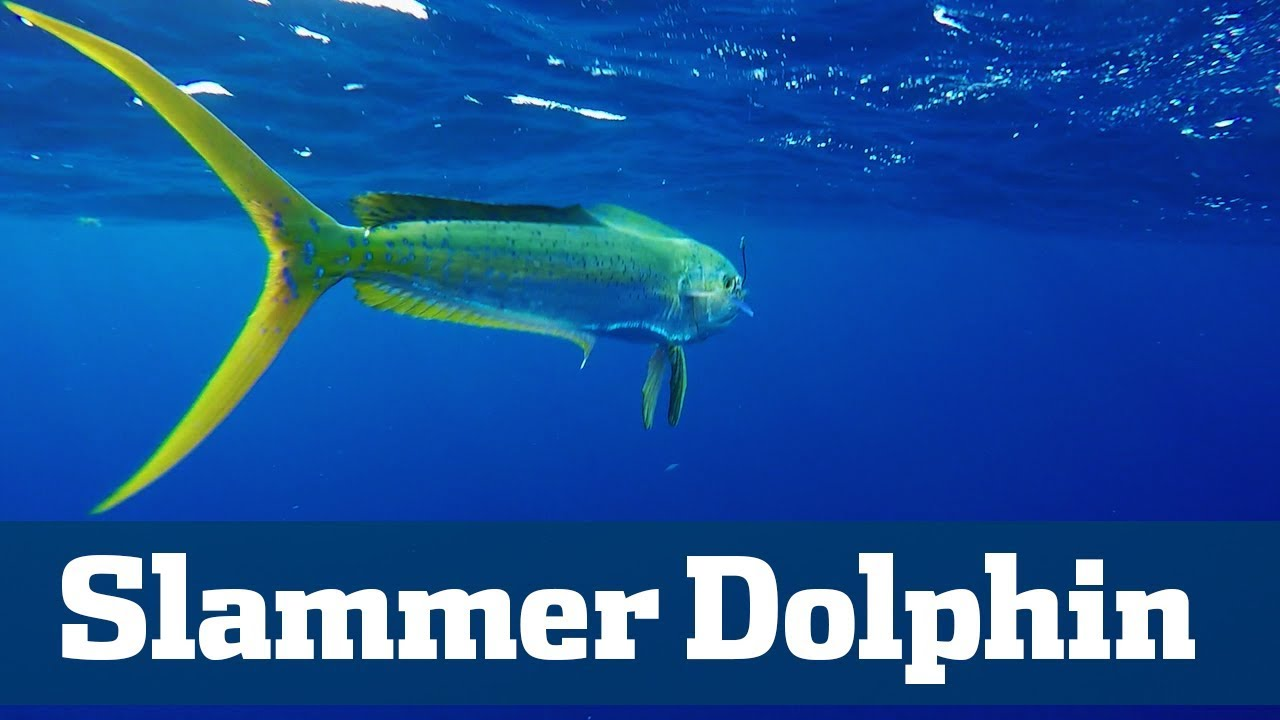 Slammer Dolphin Seminar  - Florida Sport Fishing TV