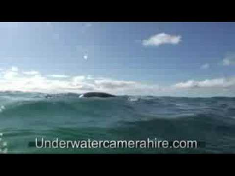 Swimming With Sea Lions Port Lincoln South Australia