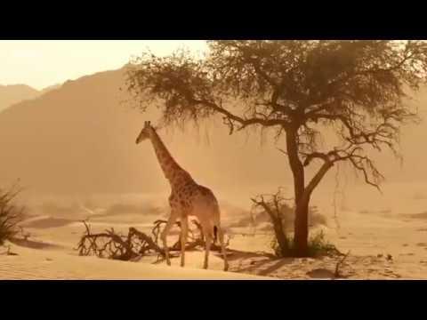Жестокий и необычный мир дикой природы. Охота и битвы животных.