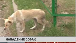 Нападение собак. Новости. 28/06/2019. GuberniaTV