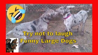Try not to laugh Funny Dogs Large Dogs cerberusk9uk
