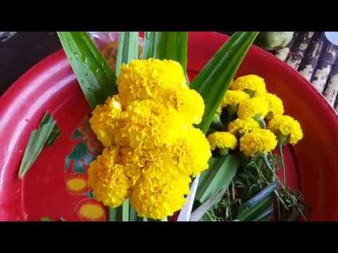 ทำ ดอกไม้ไหว้พระ จากดอกดาวเรือง แบบง่ายๆ