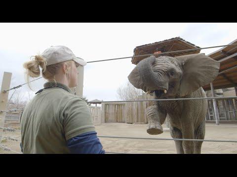 San Diego Zoo Kids - Elephants at Hogle Zoo
