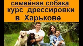 семейная собака курс дрессировки Харьков
