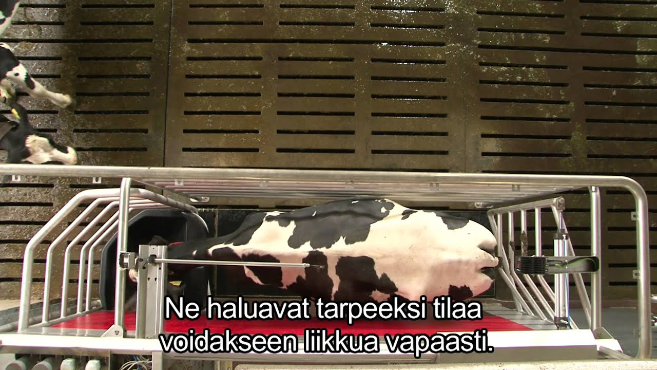 Lely Astronaut A4 - Benefits cow (Finnish / England)