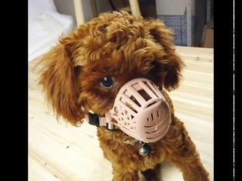 Намордник для мелких пород собак. Все самое лучшее для вашего .