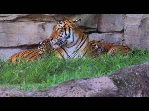 The Wildlife Docs Baby Animals Update Busch Gardens