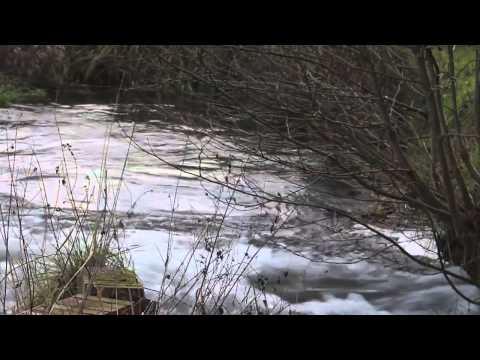 RIVER KENNET, BARTON COURT FISHERIES, EAST LODGE, KINTBURY, BERKSHIRE