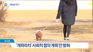 '개파라치' 시행 하루 전 연기…사생활 침해 때문?