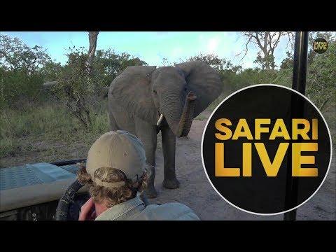 safariLIVES: Episode 5