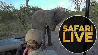 safariLIVES: Episode 5 thumbnail