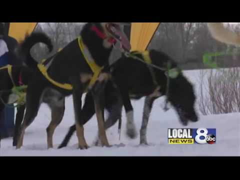 Pedigree Stage Stop Dog Sled Race