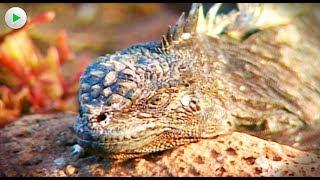 Galapagos - Phantastische Lebensformen - Tierdoku Dokumentarfilm Doku Tiere von voller Länge HD 2018