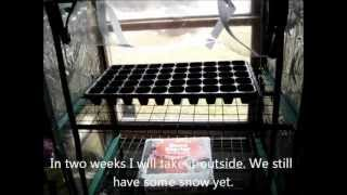 Putting Together A Winter Greenhouse For Cold Hardy Vegetables