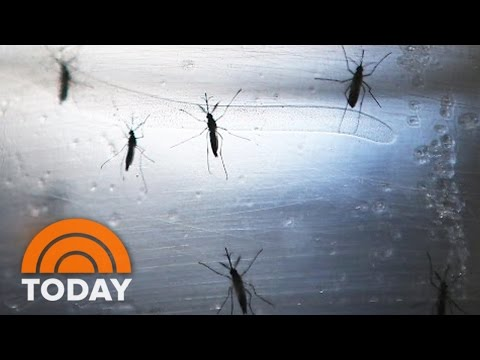 Zika In Miami: New Cases Prompt CDC To Issue Historic Travel Warning | TODAY