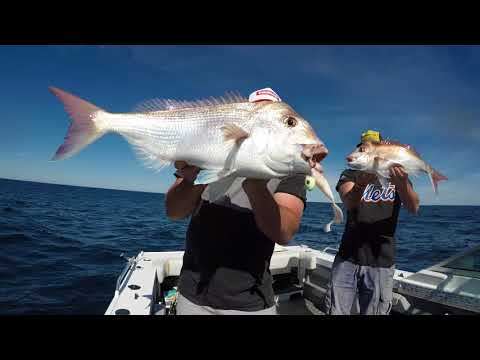 SNAPPER!! Crazy South Coast NSW Snapper Session ( NO EDIT ) View In HD