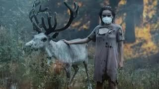 Тяжёлые последствия пожаров в Сибири: гибель животных, долгое восстановление тайги