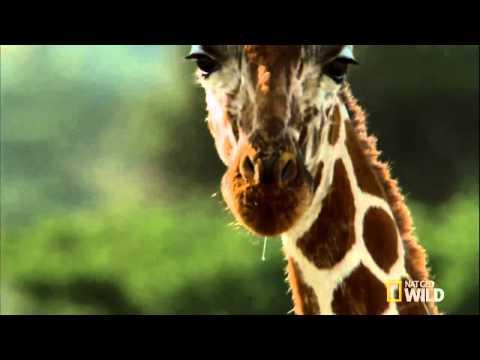 thực hành sinh 7 - xem băng hình về đời sống và tập tính của thú : Thú ăn tạp và ăn thực vật