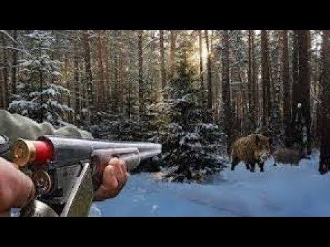 Охота на дикого