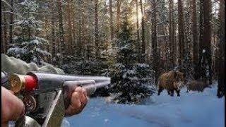 Охота на дикого кабана. Красивый момент / wild boar hunting 2017