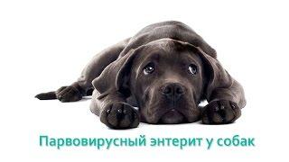 Парвовирусныйэнтерит у собак. Ветеринарная клиника Био-Вет.
