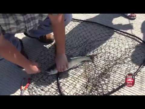 King Salmon Fishing At Lake Michigan In Chicago