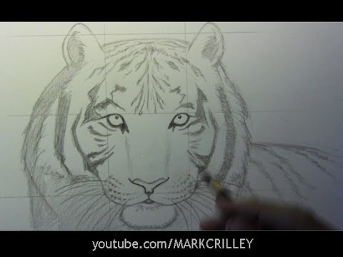 How to draw a tiger part 1 line placement youtube ccuart Image collections