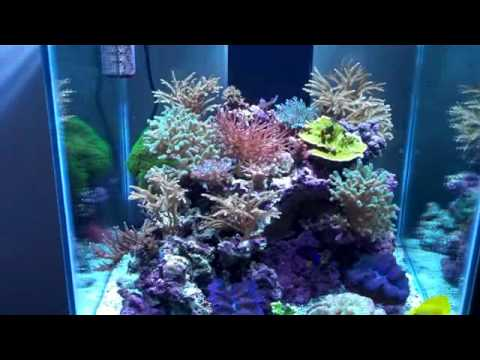 Reef tank 60g cube youtube for Cube saltwater fish tank